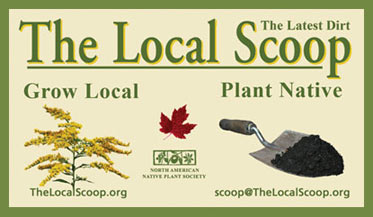Local Scoop Logo